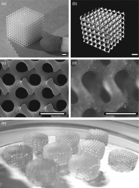 Rapid prototyping technologies for tissue regeneration - ScienceDirect