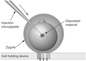 Zygote - an overview | ScienceDirect Topics