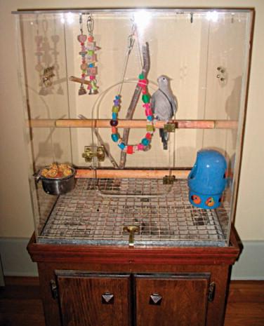 BIRDS - ScienceDirect