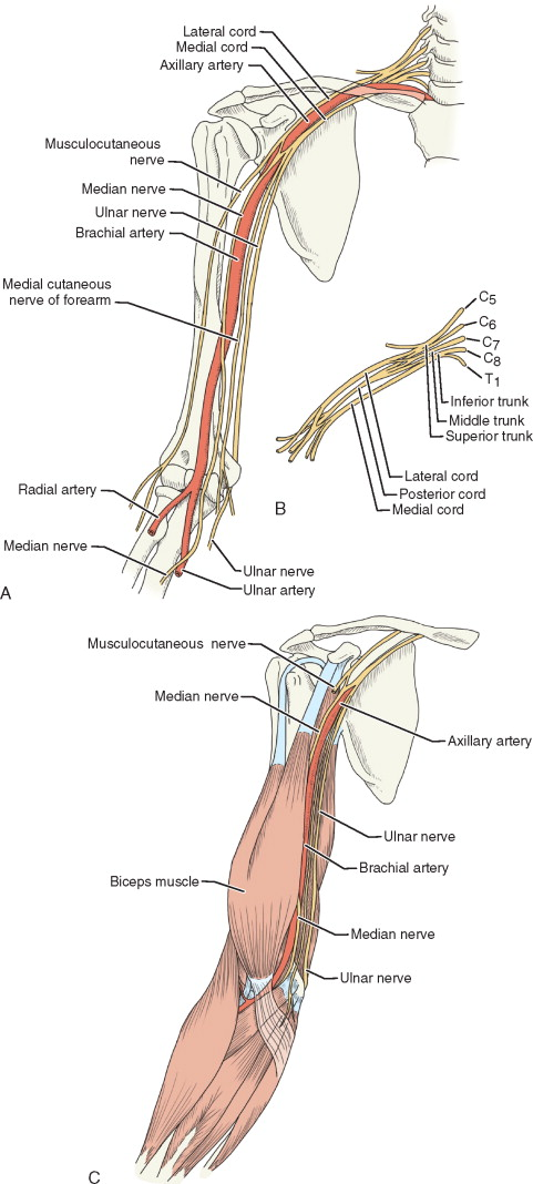 Axillary Artery An Overview Sciencedirect Topics