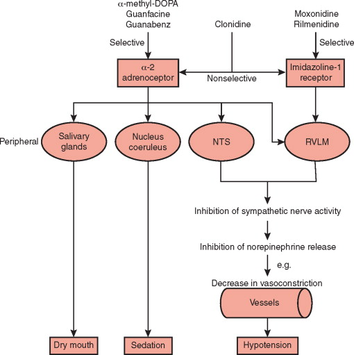 Imidazolines - an overview   ScienceDirect Topics