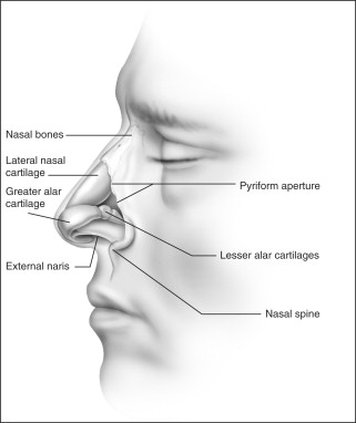 nasal obstruction and sleep- disordered breathing