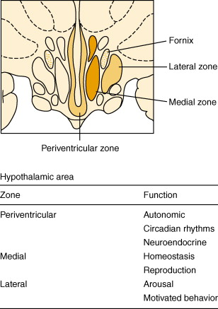 similarities between autonomic and somatic nervous system
