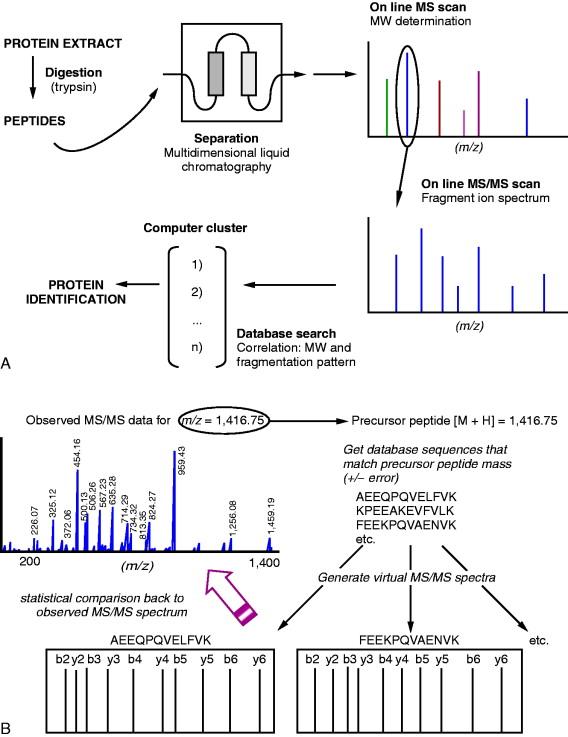 Bottom-up Proteomics - an overview | ScienceDirect Topics