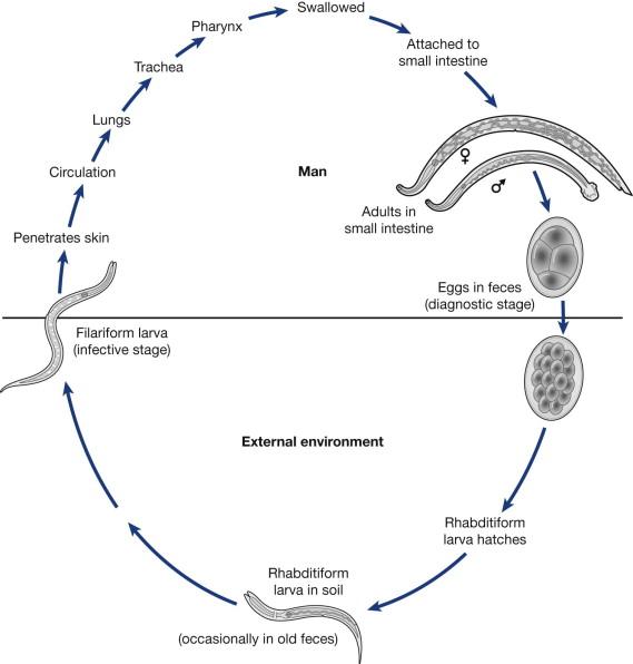 Hookworm - an overview | ScienceDirect Topics
