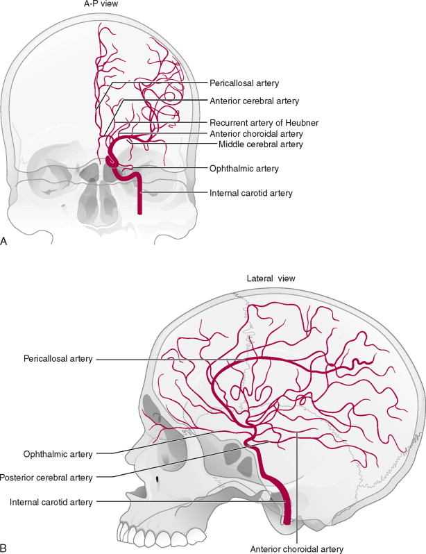 Common Carotid Artery An Overview Sciencedirect Topics