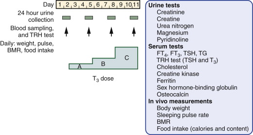 Thyroxine Metabolism - an overview | ScienceDirect Topics