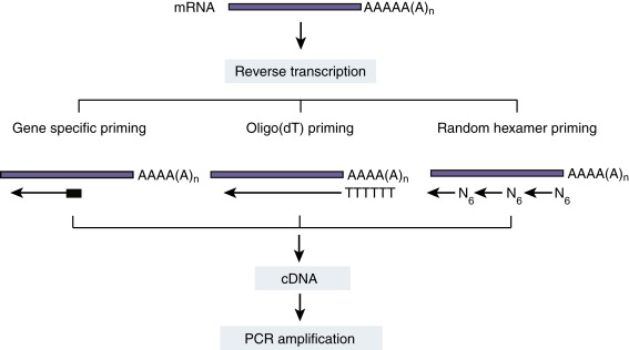 Reverse Transcription Polymerase Chain Reaction An Overview