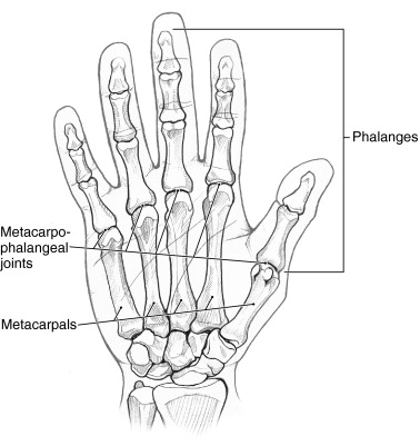 Excellent Metacarpophalangeal Joint An Overview Sciencedirect Topics Wiring Cloud Cosmuggs Outletorg