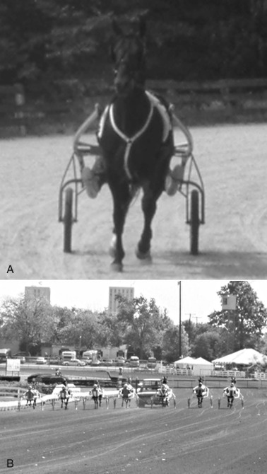 Standardbred - an overview | ScienceDirect Topics