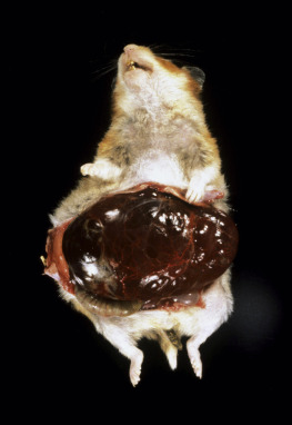 Cheek Pouch - an overview | ScienceDirect Topics