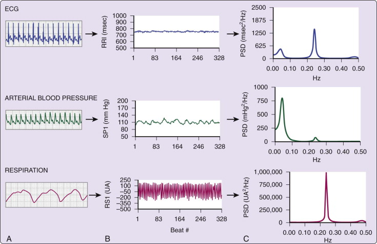 RR Interval - an overview | ScienceDirect Topics