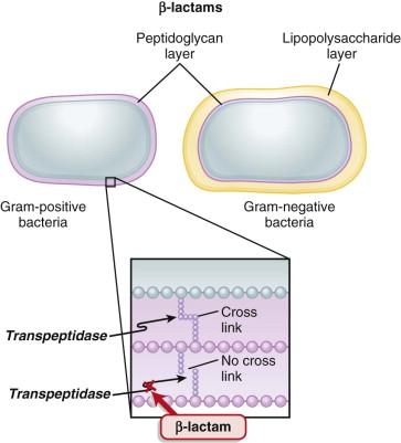 Cloxacillin - an overview | ScienceDirect Topics