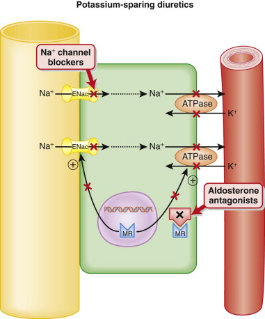 how to diuretics cause hypokalemia
