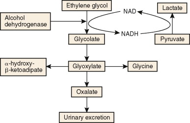 Ethylene Glycol - an overview | ScienceDirect Topics