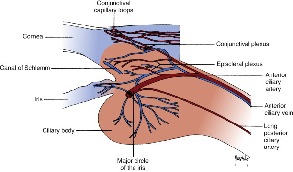 Short Posterior Ciliary Arteries An Overview Sciencedirect Topics