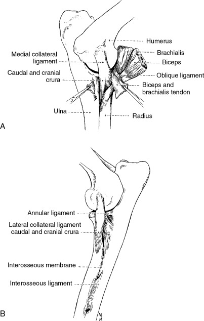 Muscle Contracture - an overview | ScienceDirect Topics