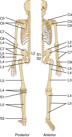 Palpation - an overview | ScienceDirect Topics