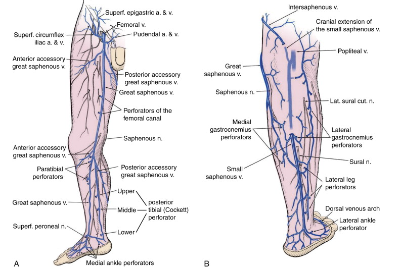 Veins Of The Lower Limb An Overview Sciencedirect Topics