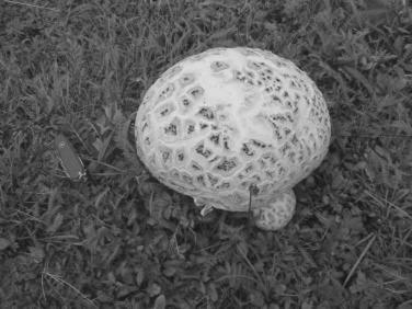 Mushroom Growing - an overview | ScienceDirect Topics