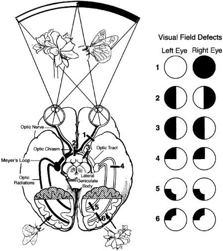 Vision Test - an overview | ScienceDirect Topics