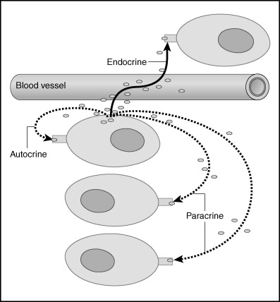 Endocrinology - an overview | ScienceDirect Topics