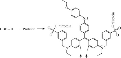 Analysis of Lipid and Protein Oxidation in Fats, Oils, and