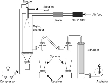 Advances in starter culture technology: focus on drying
