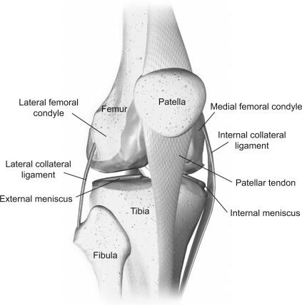 knee femur diagram biomechanics of the knee sciencedirect  biomechanics of the knee sciencedirect