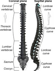 intervertebral disc an overview sciencedirect topics