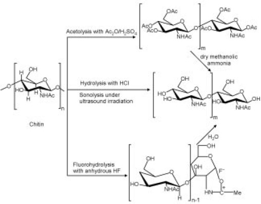 Chitin and chitosan from marine by-products - ScienceDirect