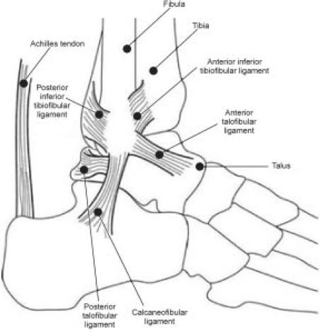 Biomechanics Of Joints
