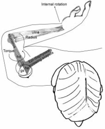 Wiring Diagram For 2004 Hemi 5 7