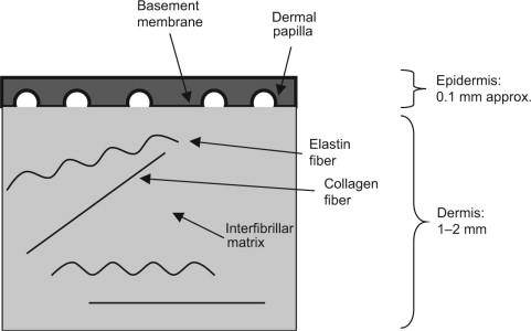 Biomechanics of skin - ScienceDirect