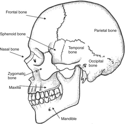 Replacement Materials For Facial Reconstruction At The Soft Tissue