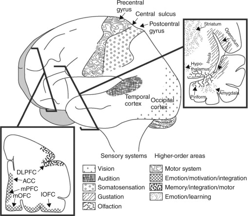 neuroimaging of sensory perception and hedonic reward sciencedirect Types of Presupposition a simplified overview of important neural substrates in the perception and evaluation of products the sensory systems are important for encoding stimulus