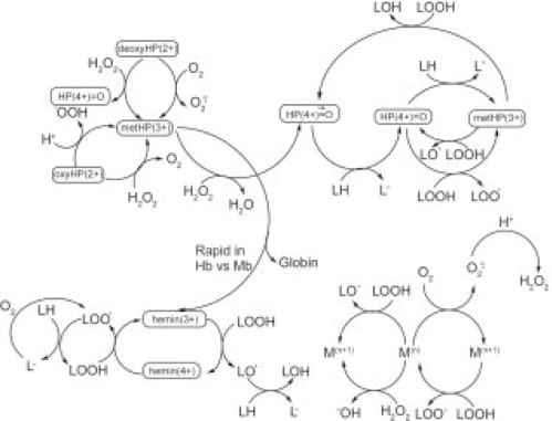 Heme Proteins And Oxidation In Fresh And Processed Meats