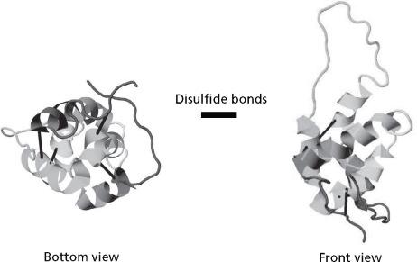 Sunflower Proteins - ScienceDirect