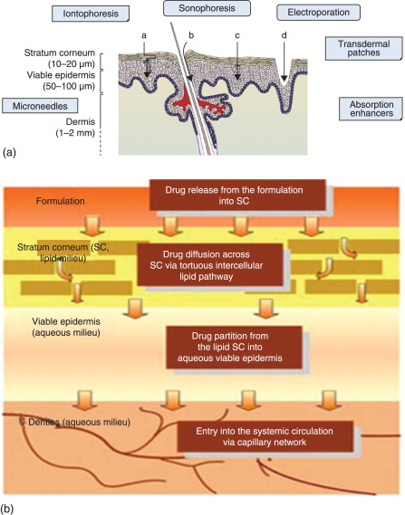 Transdermal Delivery - an overview | ScienceDirect Topics