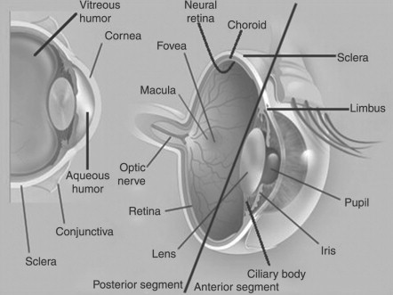 Eye Anatomy Physiology And Barriers To Drug Delivery Sciencedirect